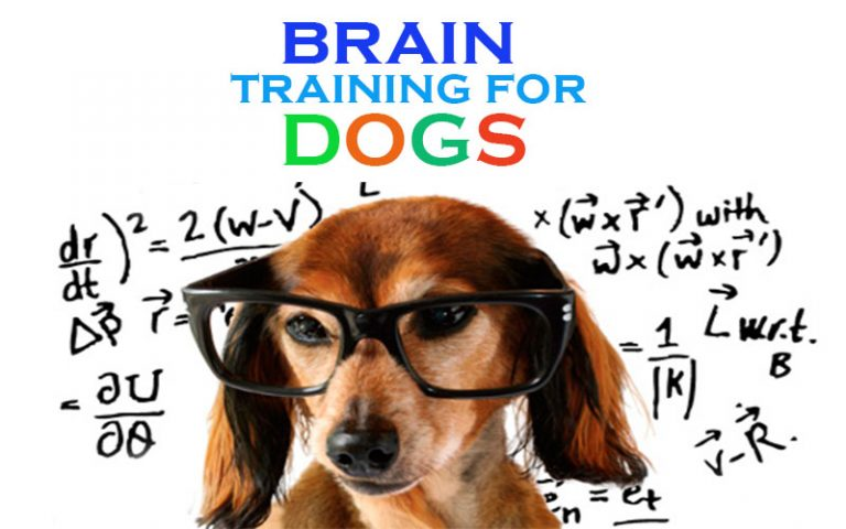 Brain Training 4 Dogs  Size Review